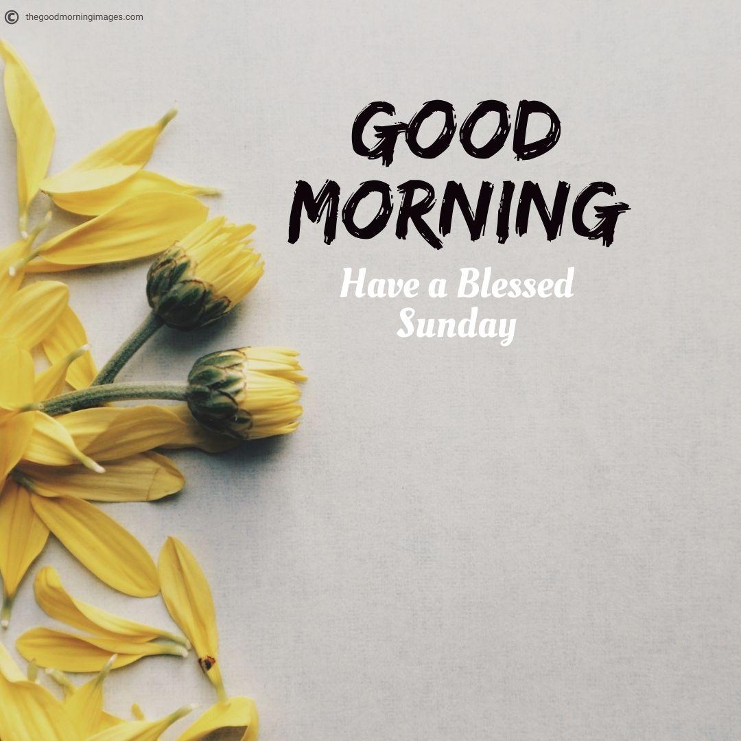best-Sunday-image-with-rose