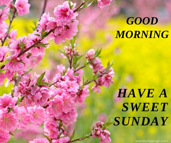 sweet-Sunday-image