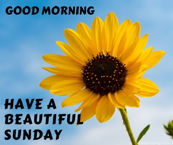 beautiful-Sunday-image