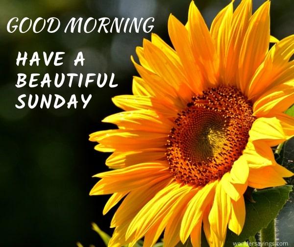 enjoy-your-Sunday