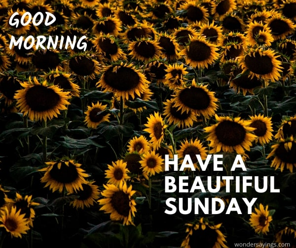 pic-of-the-good-morning-Sunday